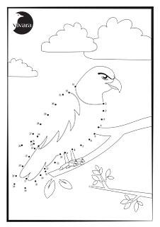 Nummerteckning Rovfågel