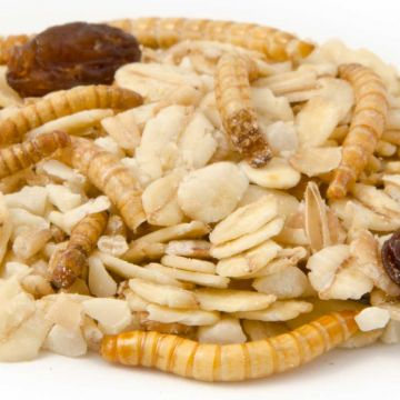 Fågelfrö Premium fettfoder med mjölmask