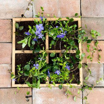 Träram för växter 30x30cm