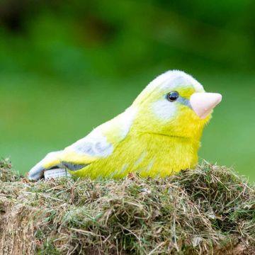 Gosedjur Grönfink med ljud