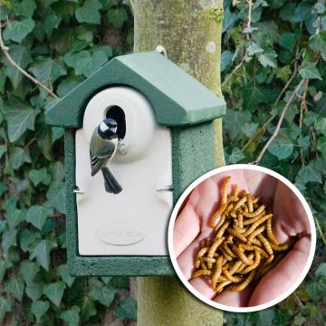 Fågelholk- paket Sevilla WoodStone®