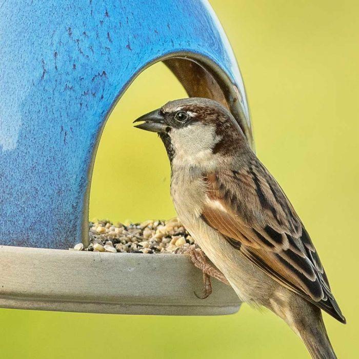 Blandning för småfåglar