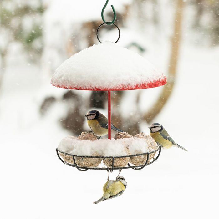 Fågelmatare Bunbury (röd)