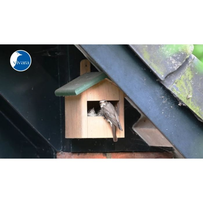 Fågelholk Ecuador halvöppen