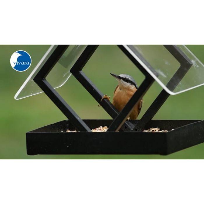 Fågelmatare Darwin