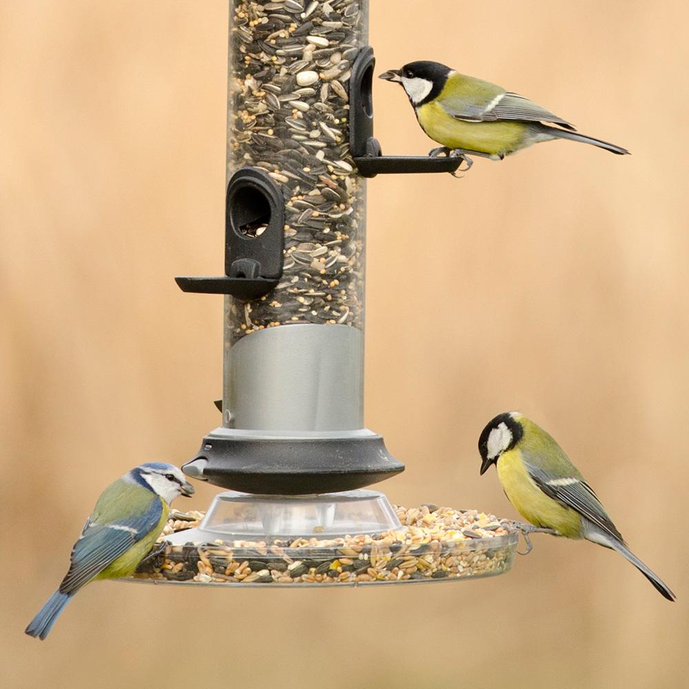 mata fåglar hur länge