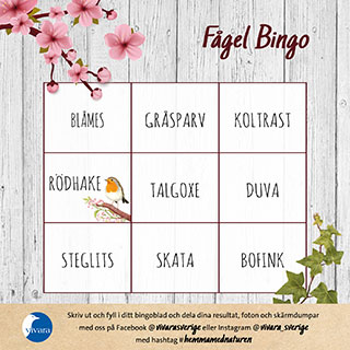 Fågel Bingo