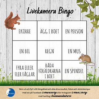 Livekamera Bingo