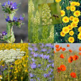 Blomblandning för solitärbin, 22 sorter (25 g)