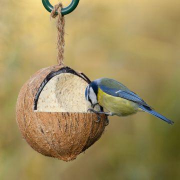 Fylld kokosnöt med insekter