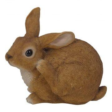 Kanin (sittande)