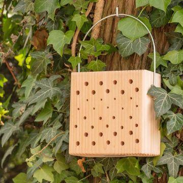 Insektsblock Lanzarote