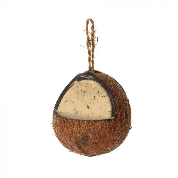 Kokosnöt med mjölmask och insekter