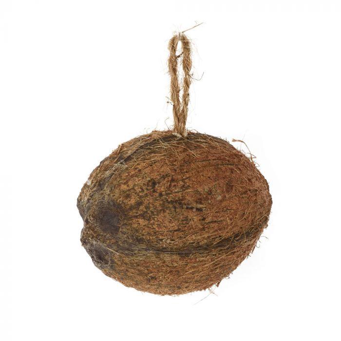 Kokosnötshalva med mjölmask och insekter