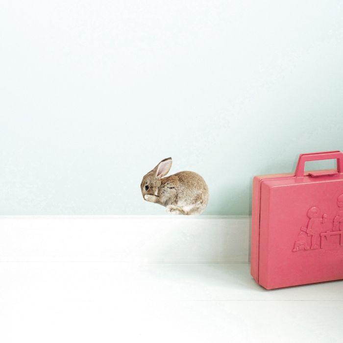 Kaninunge från KEK