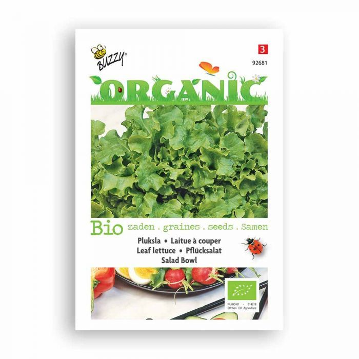 Bladgrönsallat 'Green Salad Bowl'