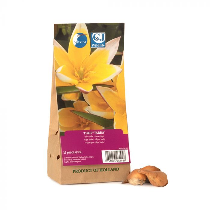 Ekologisk Flocktulpan (Tulipa 'Tarda') 15 st.