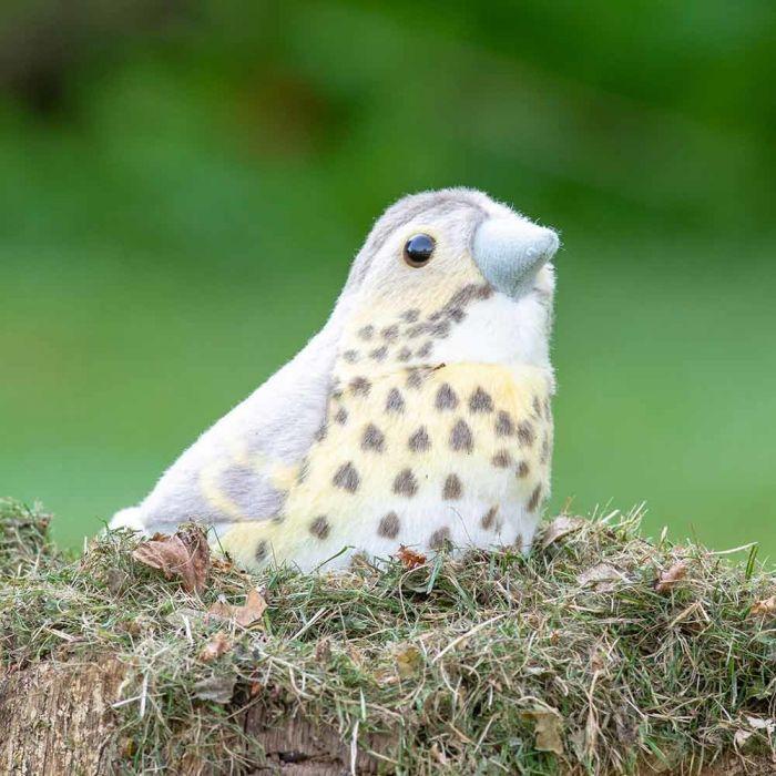 Singing Bird Taltrast