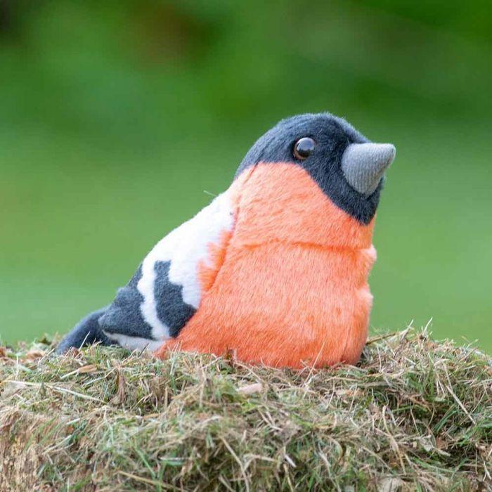 Domherre Singing Bird