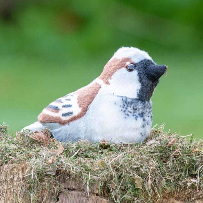 Gråsparv Singing Bird