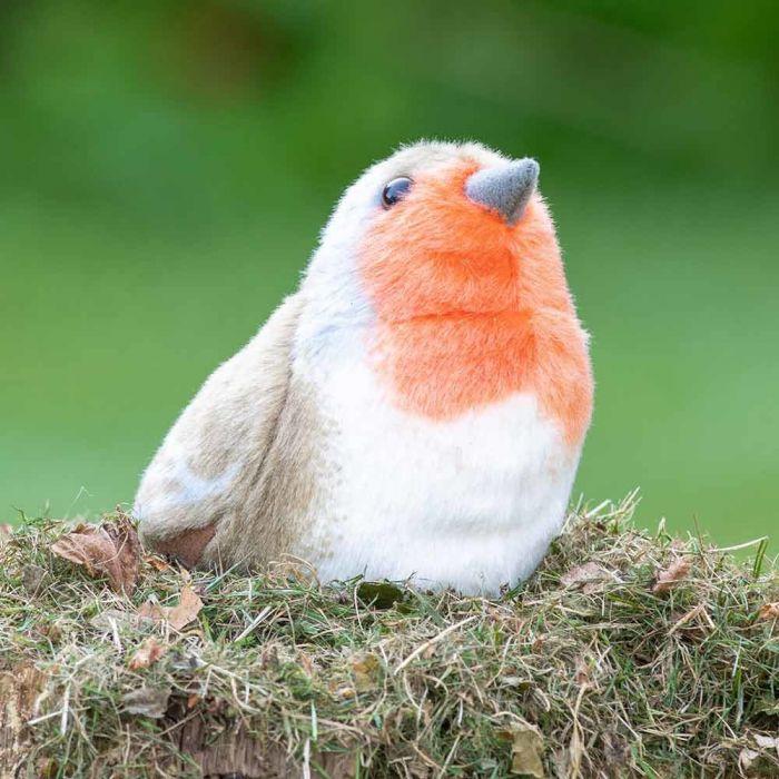 Rödhake Singing Bird