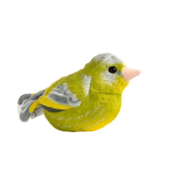 Grönfink Singing Bird
