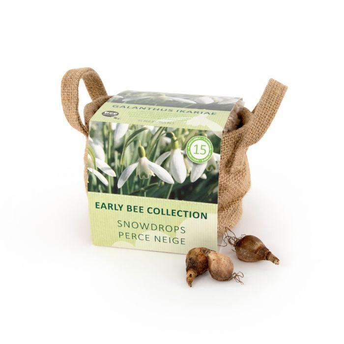 Grekisk snödroppe (Galanthus Ikariae) 15-pack